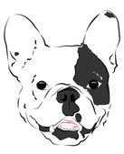 Bozal bulldogs — Vector de stock