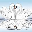 Pair of swans — Stock Vector