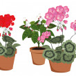 Постер, плакат: Flowering houseplants