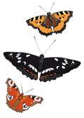 Farfalle — Vettoriale Stock