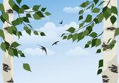 Birch on sky background — Stock Vector