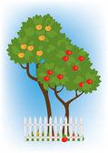 Apple trees in the garden — Stock Vector