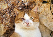 Blind cat — Stock Photo