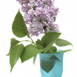 Branch of a lilac isolated on white background — Stock Photo