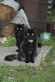 Two black cat. on the threshold of a village house. — Stock Photo