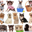 Set dogs isolated on white background. — Stock Photo #37126041