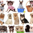 Set dogs isolated on white background. — Stock Photo
