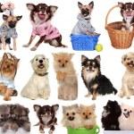 Set dogs isolated on white background. — Stock Photo