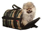 Perro pequeño. estudio de fotografía sobre un fondo blanco. — Foto de Stock