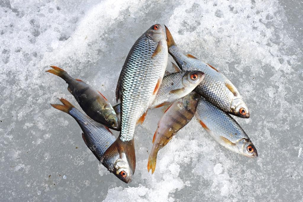 Картинки по запросу рыба на снегу