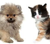 Little cute puppy and red mixed-breed kitten isolated on white. — Stock Photo