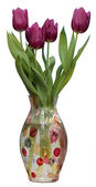 Fresh spring  tulips in vase. isolated white background. — 图库照片