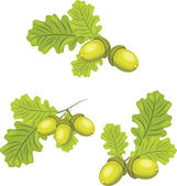 Ramas de roble con bellotas — Vector de stock