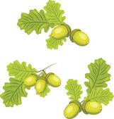 Rami di quercia con ghiande — Vettoriale Stock