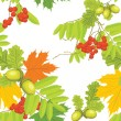 Acorns, rowan and maple leaves isolated on the white. Autumn background — Stock Vector