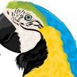 Parrot head — Stock Vector