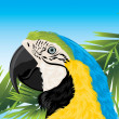 Parrot among palm branches - Stock Vector