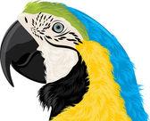 Parrot head — Stock Vector
