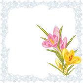 Rosa e giallo Croco nel fotogramma congelato — Vettoriale Stock