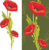 Bouquet of red poppies — Stock Vector