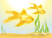 Two goldfishes among algae and pebbles — Stock Vector