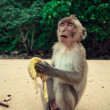 Funny monkey. — Stock Photo