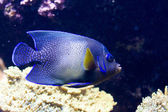 Exotic fish — Foto de Stock