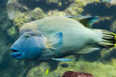Exotic fish — Stockfoto