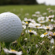 Stock Photo: Golf play