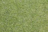 Texture de l'herbe — Photo