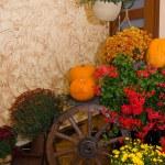 Indoor Halloween decoration — Stock Photo #13745226