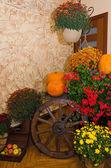 Decorazione di halloween — Foto Stock