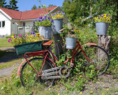 Bicycle like a flowerpot — Stock Photo