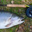 Rainbow trout like a fly fishing trophy — Stock Photo #47459197