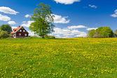 Swedish farm in May — Stock Photo
