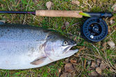 Rainbow trout like a fly fishing trophy — Stock Photo
