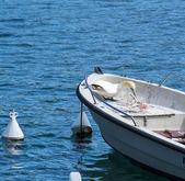 Beautiful gannet — Stock Photo