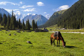 Mountain landscape with grazing horse — Stockfoto