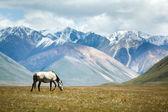 多彩山背景上的马 — 图库照片