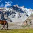 Grazing horse at sunny day in high snowy mountains — Stock Photo