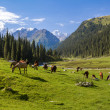 Horses grazing in mountains — Stockfoto