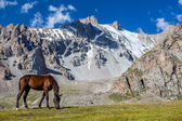 Grazing horse at sunny day in high snowy mountains — Stockfoto