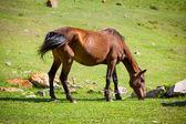 Feeding bay horse — Stock Photo