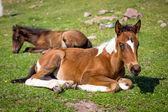 Małe słodkie źrebiąt na trawie — Zdjęcie stockowe