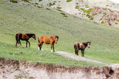 Threee horses in the field — Stock Photo