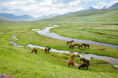 Grazing horses in the mountains — Stock Photo
