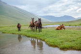 Pasturing horses at river — Stock Photo