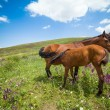 Mare feeding colt — Stock Photo