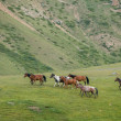 Herd of horses with different colours — Stock Photo #32228955