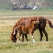 Red horse and foal — Stock Photo #32229209